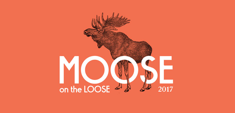 Moose on the Loose 2017